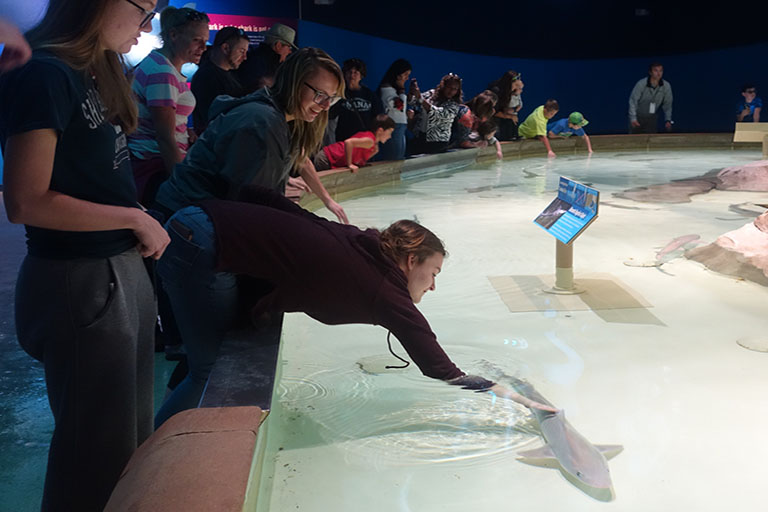 A student pets a shark at the zoo.